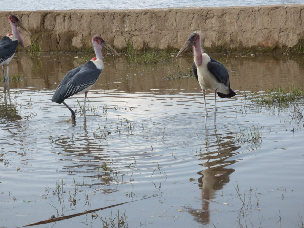 Marabouts d'Afrique, Lac Awassa